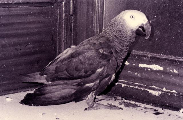 anbololoroa1993.jpg